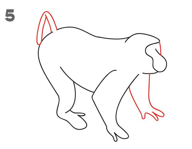 kako-nacrtati-majmuna-slika-5