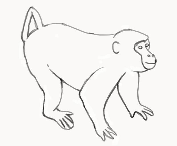 kako-nacrtati-majmuna-slika-6