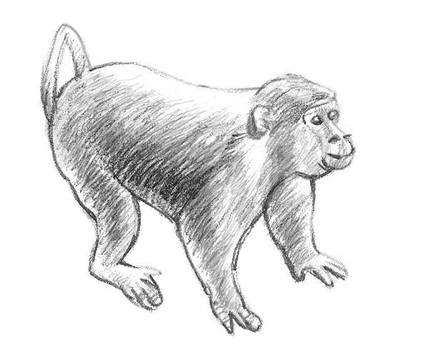 kako-nacrtati-majmuna-slika-7