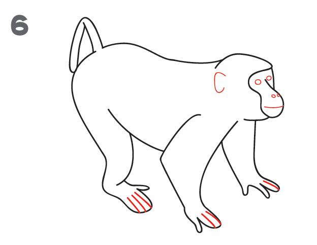 Line Drawing Of Monkey Face : Crtanje majmuna savjeti za lijepo