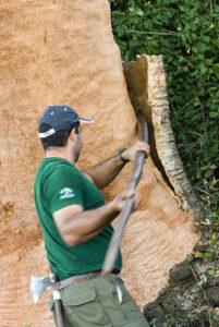 Proces odvajanja plute sa stabla.