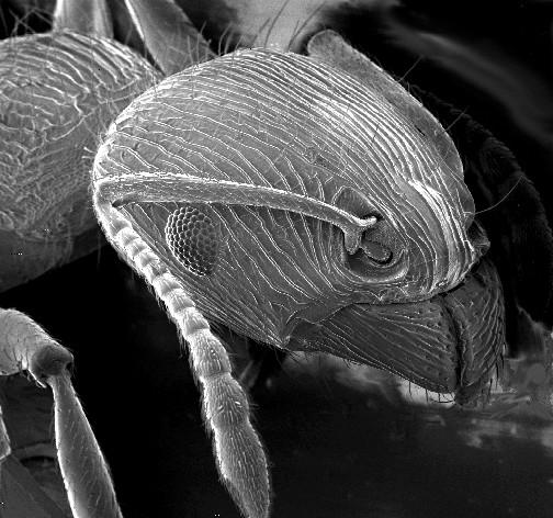 mrav-sem-mikroskop